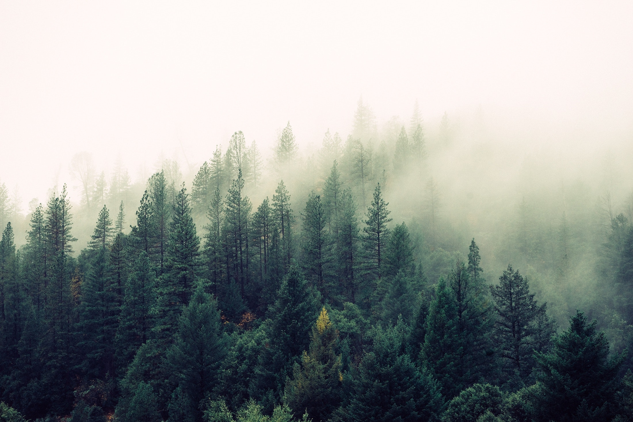 fog-foggy-forest-4827_1